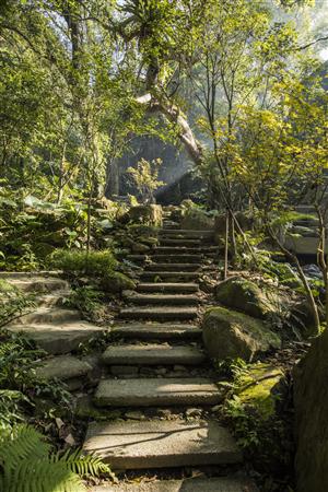 新北三峽 大板根森林溫泉渡假村_環境_森林步道