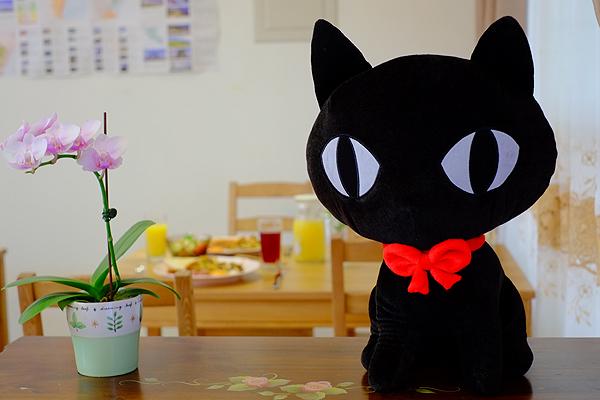 小貓兩三隻_環境_環境