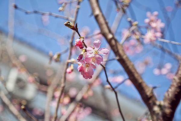 苗栗三義 櫻花渡假會館_環境_環境