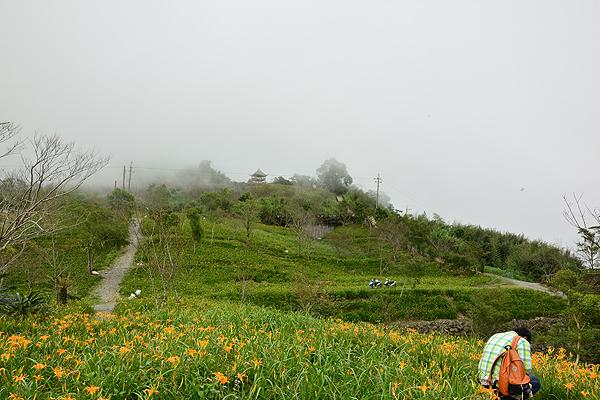 旺旺庭園咖啡民宿_環境_環境