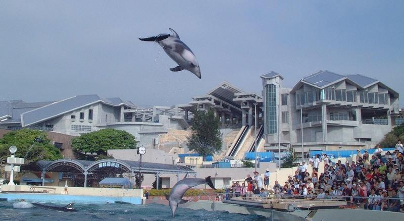 【沖繩好好玩.A檔海邊 + 市區】HI翻沖繩~海洋博公園.古宇利大橋+古宇利海洋塔4日(華航)