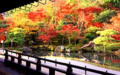 【JAL PAK日本假期】東北絕景、紅葉100選、奧入瀨溪、藏王 7日