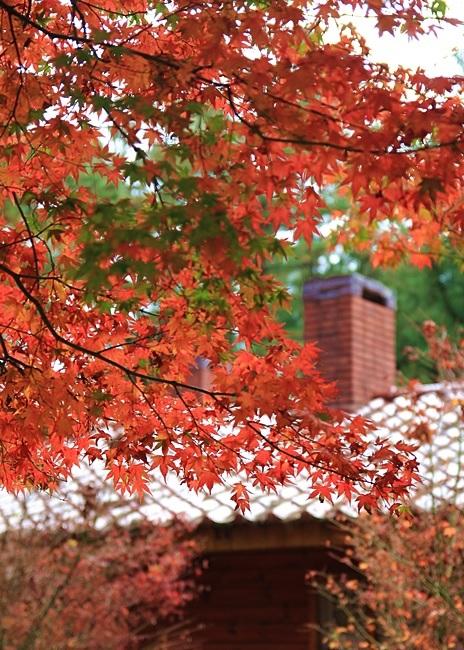 【秋季限定】關東近郊涼楓秋季溫泉藝文秘景輕旅行5日