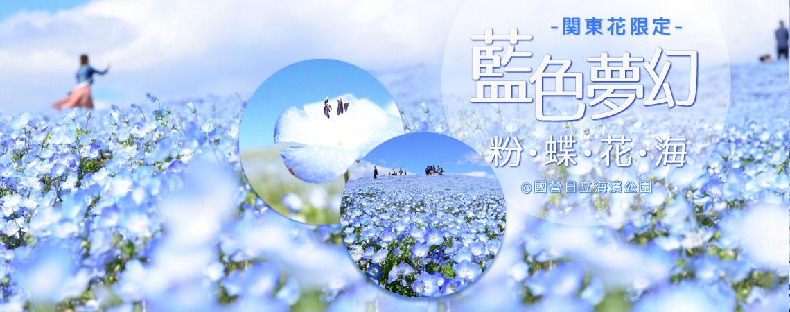 關東花限定,在國營日立海濱公園觀賞藍色夢幻粉蝶花海