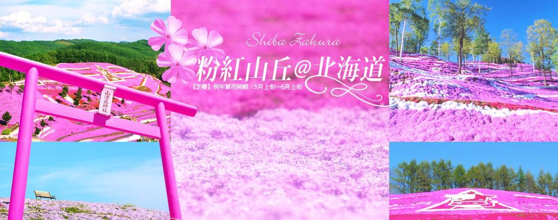 北海道芝櫻、粉紅北海道