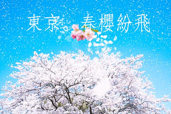 清明連假、東京賞櫻5日