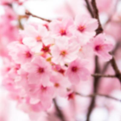 季節限定‧花饗宴、春遊指南
