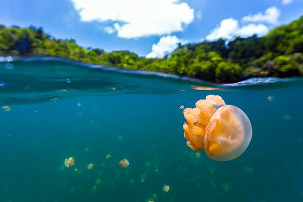 潛進帛琉海洋泡泡