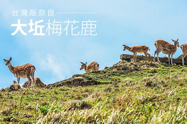 馬祖海角樂園賞鹿3日