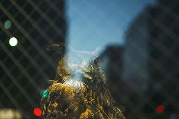 東京智慧貓頭鷹青年旅舍 WISE OWL HOSTELS TOKYO